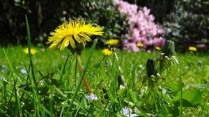 Rasenmäher für hohes Gras