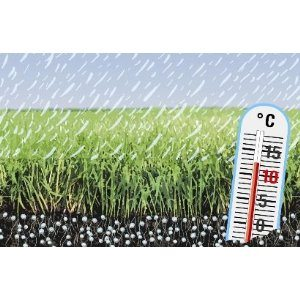 Compo 13112 Rasendünger mit Langzeitwirkung 20 kg für 750 m²