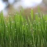 Tipps und Tricks – so erhalten Sie einen gesunden Rasen: