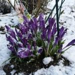 Wintertipps für den Rasen