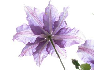 flower-123766_960_720