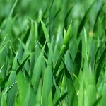 grass-383284_960_720