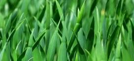 ExpertenTesten.de stellt seine besten Rasenmäher vor